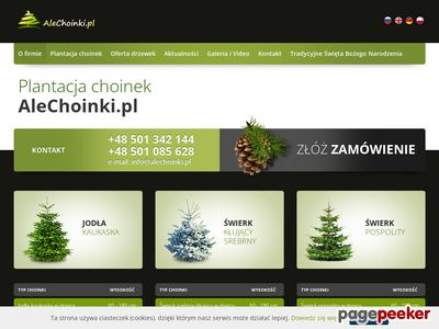 Producent choinek