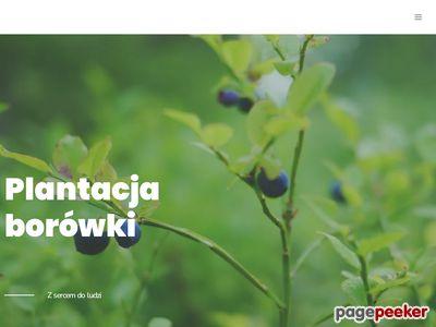 BorowkaWysoka.pl-owoce borówki, sprzedaż borówek